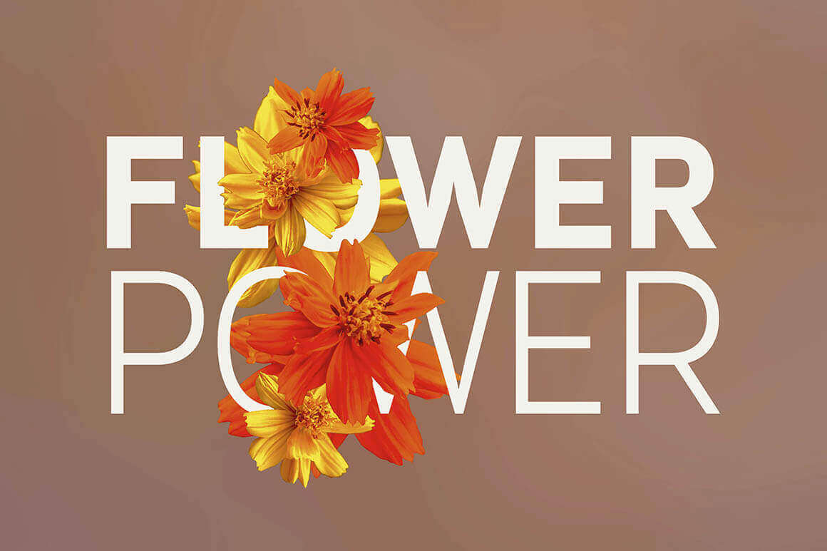 Bundle: 250+ Hi-Res Flower Photos, Backgrounds, Templates and More – only $10!