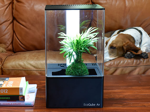 EcoQube Air Desktop Greenhouse for $169