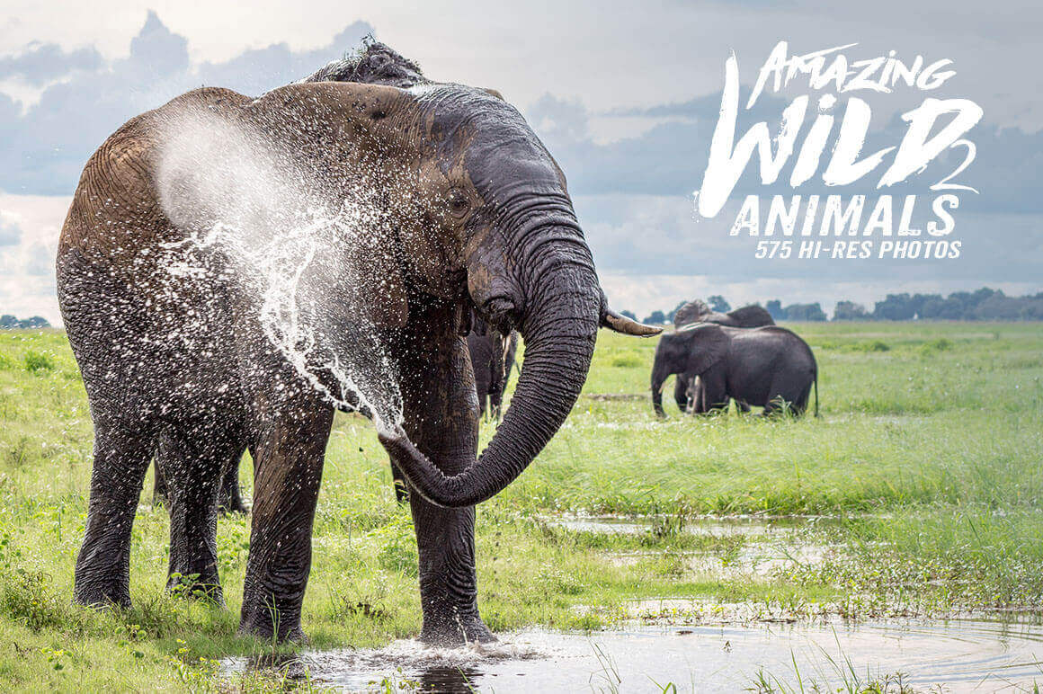 500+ Hi-Res Photos of Wild Animals from Africa – only $9!