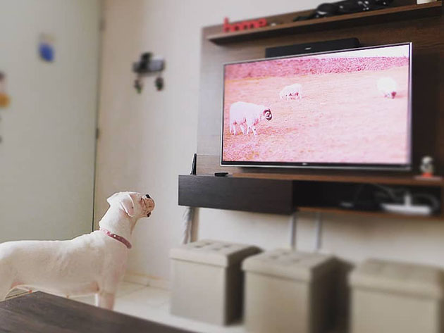 Relax My Dog Video Streaming: 2-Yr Subscription for $39