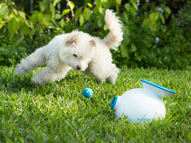 iFetch: Automatic Ball Launcher for Dogs for $115