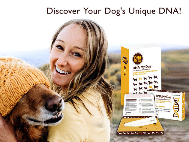DNA My Dog Breed Identification Test Plus Full Genetic Screening for $178