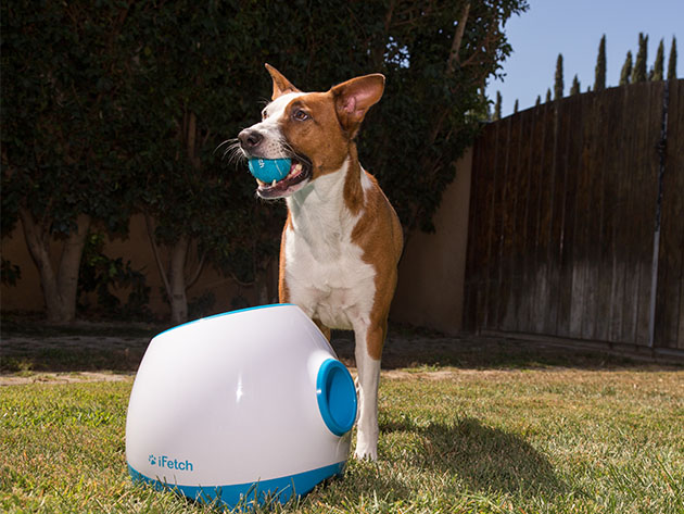 iFetch Too: Automatic Ball Launcher for Large Dogs for $199