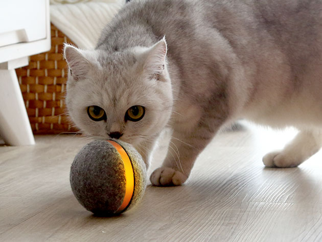 Wicked Ball: Interactive Toy for Cats for $42